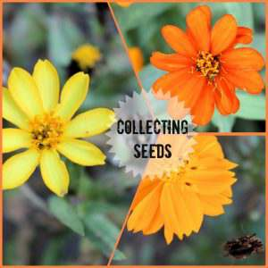One way to save money while gardening is by collecting and saving seeds. So easy to do and easy to store.