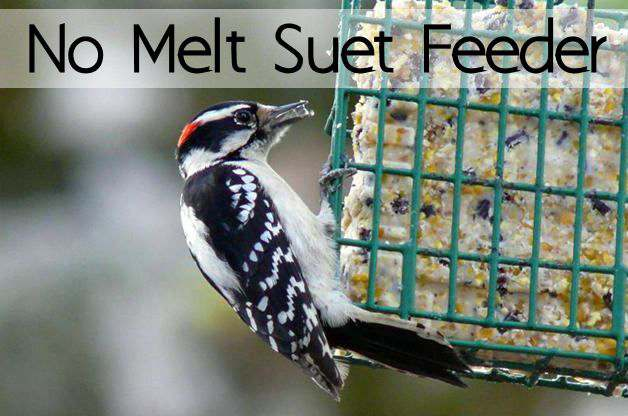 No Melt Suet and Recipe