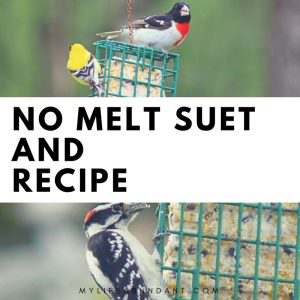 Make your own suet recipe and watch the birds flock to your feeders. Its easier than you think and also learn about No Melt Suet