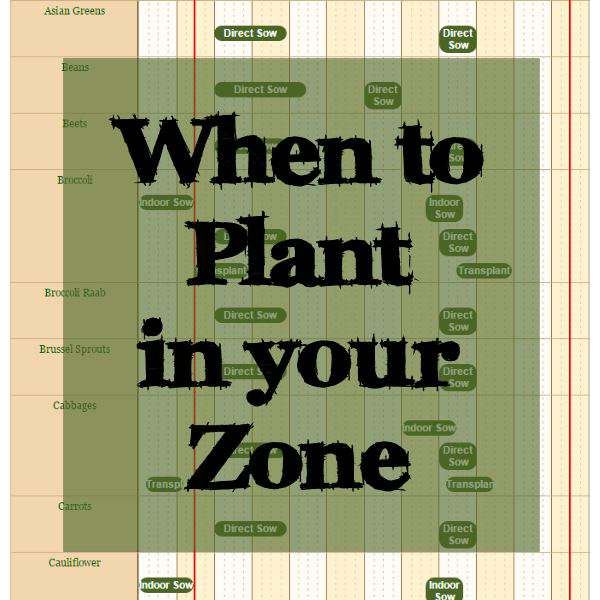 When to Plant in Your Zone