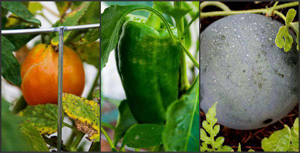 June Garden Update 2015 + {Giveaway}