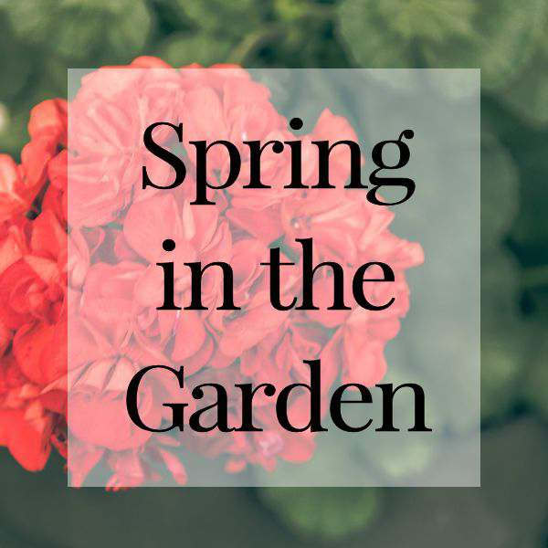 Spring in the garden is the best time of the year. All the blooms, veggies and fruits are starting to grow and mature.
