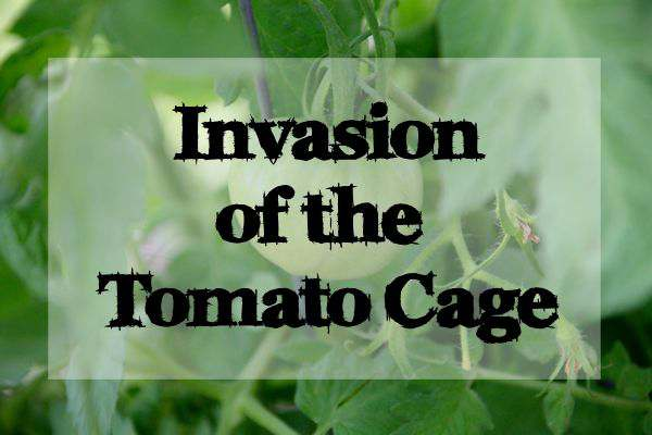 May 2016 Garden Update: Invasion of the Tomato Cages