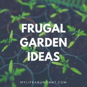 Gardening is a great way to grow healthy pest free food your family and friends can enjoy. Here are a few frugal ways grow your garden.