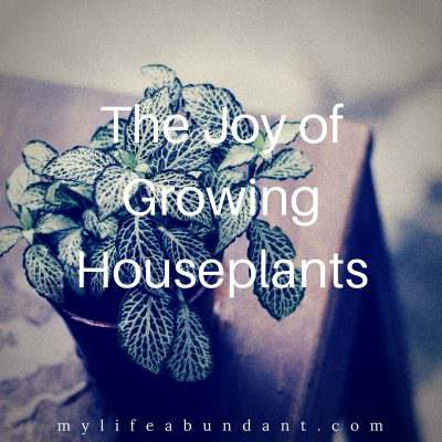 The Joy of Growing Houseplants