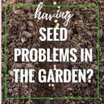 Seed Problems in the Garden?