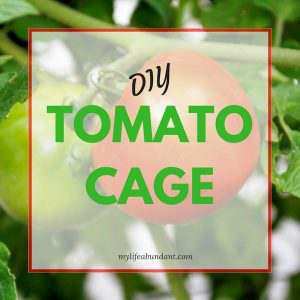 My New Heavy PVC Duty Tomato Cage