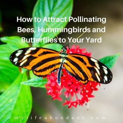 How to Attract Pollinating Bees, Hummingbirds and Butterflies to Your Yard