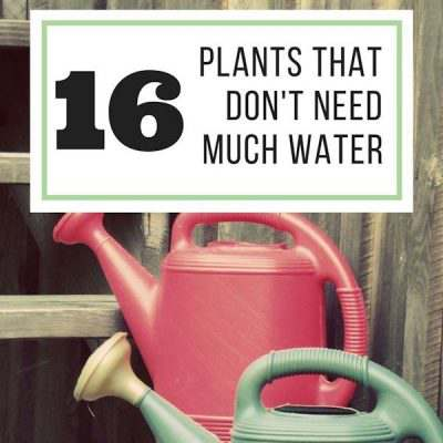 16 Plants That Don't Need Much Water