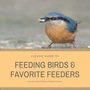 A Quick Guide to Feeding Birds & My Favorite Feeders