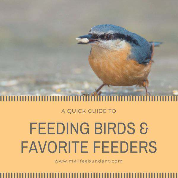 Looking for ideas on how to be a great backyard bird feeder? Here are my favorite feeders that I have used and some tips