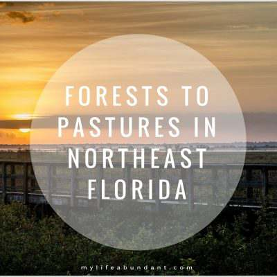 Forests to Pastures in Northeast Florida