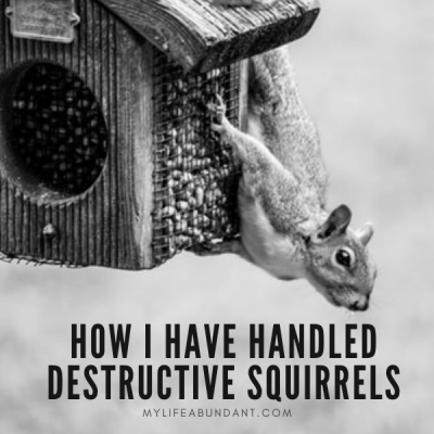 Do you have squirrels destroying your property? Here are a few things I have learned to keep pesky squirrels at bay.